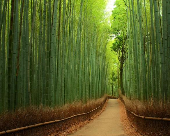 Experience tranquility at Bamboo Groves, Arashiyama, Japan