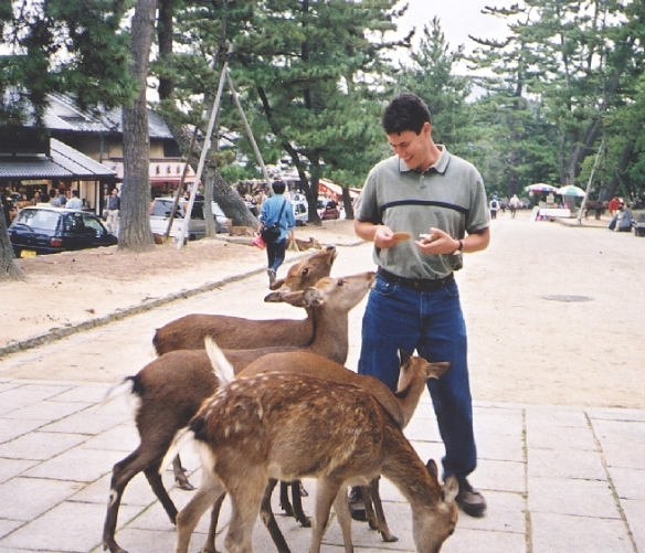 Feed the deers at Nara Park, Japan