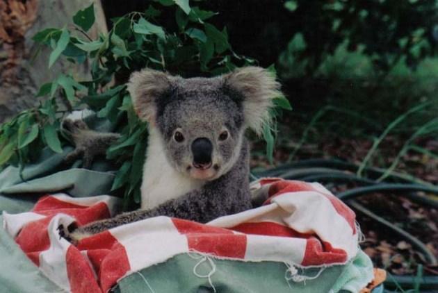 CheapTickets.sg_PortMacquarie_NSW