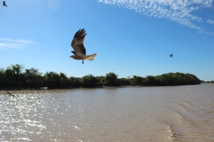 Birds of prey on the jumping crocodile cruise