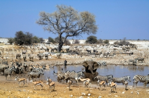 Go wild camping in the Etosha National Park Nature Reserve